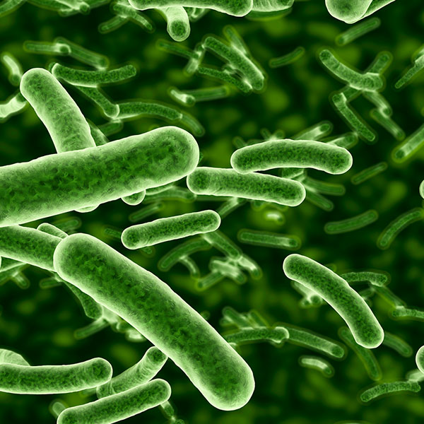 Bacteria are microscopic single cell organisms